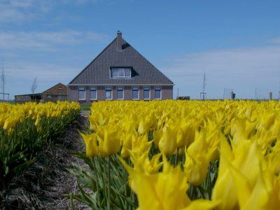 1 Boerderij t Zand in de bloembollenvelden